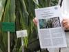 Patenschaften im Botanischen Garten Berlin. Icon Wir sind schon Paten. Foto: Botanischer Garten Berlin