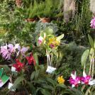 Orchideenausstellung