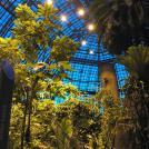 Nächtliche Stimmung im Großen Tropenhaus