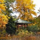 Herbst rund um den Japanpavillon