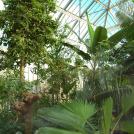 Gewächshaus der Tropischen Nutzpflanzen, Innenansicht