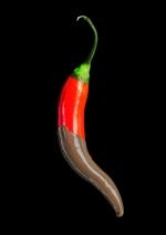 Chili & Schokolade. Der Geschmack Mexikos. Ausstellung im Botanischen Museum Berlin. Foto: Chr. Hillmann-Huber / Botanischer Garten und Botanisches Museum Berlin