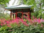 Japanpavillon mit blühenden Prachtspieren
