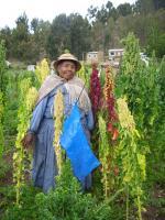 Quinoa-Anbau am Titicacasee, Bolivien. Foto: S. Fuentes, Botanischer Garten und Botanisches Museum Berlin-Dahlem