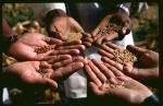Save Our Seeds - Gentechnikfreies Saatgut - Vortrag von Benny Haerlin © Zukunftsstiftung Landwirtschaft