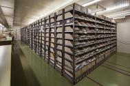 Regale im Herbarium