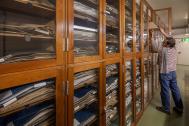 Schränke im Herbarium