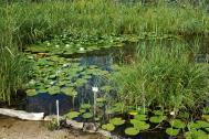 Sumpf- und Wasserpflanzengarten