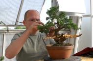 Bonsaiausstellung des Bonsaiclub-Berlin im Botanischen Garten Berlin. Foto: Bonsaiclub-Berlin