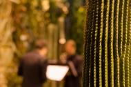 Palmensinfonie. Foto: K. Schomaker, Botanischer Garten und Botanisches Museum Berlin