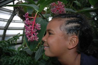 Früchte der Tropen
