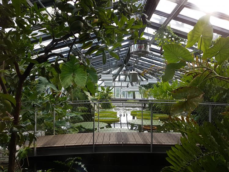 Pankow bärlauch volkspark botanischer Botanischer Volkspark